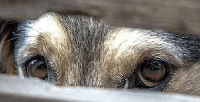 Жестокое обращение с животными статья 245 УК РФ: куда обратиться, комментарии, закон 2020